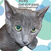 Adopt A Pet :: RICKY - Rock On! - Monrovia, CA