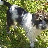 Adopt A Pet :: Koko - Miami, FL