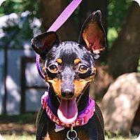 Adopt A Pet :: Crystal - Topeka, KS