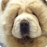 Adopt A Pet :: Sunshine - Tucker, GA