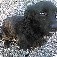 Adopt A Pet :: Bonner - Cumberland, MD