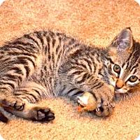 Adopt A Pet :: Freeway - Davis, CA