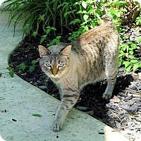 Adopt A Pet :: Salem - Davis, CA
