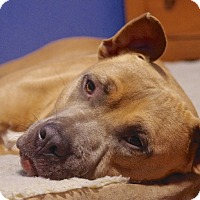 Adopt A Pet :: Tobias - Reisterstown, MD