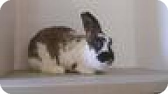 Other/Unknown Mix for adoption in Paramount, California - Layla