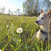 Adopt A Pet :: Kramer - Georgetown, KY