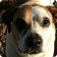 Adopt A Pet :: Mannie - Bakersville, NC
