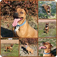 Adopt A Pet :: Chuck - Yuba City, CA