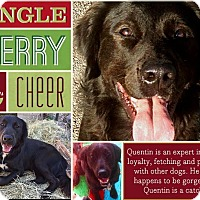 Adopt A Pet :: Quentin - Bastrop, TX