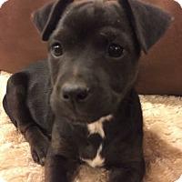 Adopt A Pet :: Andy - Mount Laurel, NJ