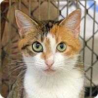 Adopt A Pet :: 10309872 - Brooksville, FL
