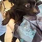 Adopt A Pet :: Fuzzy