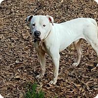 Adopt A Pet :: PETEY*needs a foster - Sterling, MA