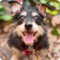 Adopt A Pet :: Nicole - Sherman Oaks, CA