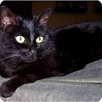 Adopt A Pet :: Mimi - Portland, OR