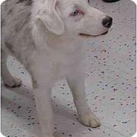 Adopt A Pet :: Morgan - Mesa, AZ