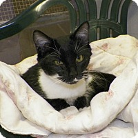Adopt A Pet :: Storm - Dover, OH
