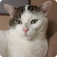 Adopt A Pet :: Dexter - Troy, MI