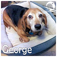 Adopt A Pet :: George - Chicago, IL