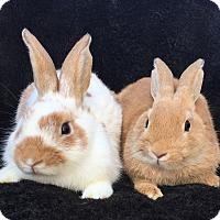 Adopt A Pet :: Jeepers & Jinkies - Watauga, TX