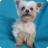 Adopt A Pet :: Angelo - Temecula, CA