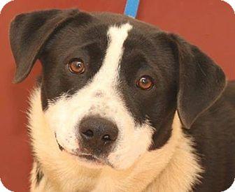 Border Collie Mix Dog for adoption in McDonough, Georgia - Joel