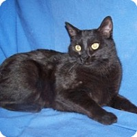 Adopt A Pet :: Colossus - Colorado Springs, CO