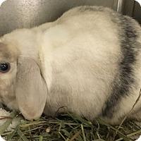 Adopt A Pet :: Blueberry - Bonita, CA