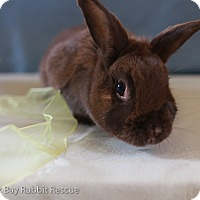 Other/Unknown for adoption in Livermore, California - Amy