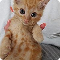 Adopt A Pet :: Borden     170871 - Atlanta, GA