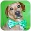 Photo 3 - Beagle/Golden Retriever Mix Dog for adoption in McArthur, Ohio - Jonnie