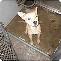 Adopt A Pet :: Seth - Alexandria, VA