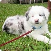 Adopt A Pet :: Kepler - Madison, WI