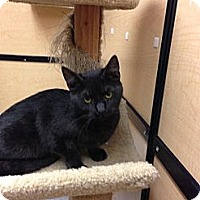 Adopt A Pet :: Newbi - Monroe, GA