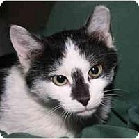 Adopt A Pet :: Cosmos - Cincinnati, OH