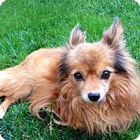 Adopt A Pet :: Dylan - Gilbert, AZ