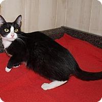 Adopt A Pet :: Sylvia - Jackson, MS