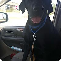 Adopt A Pet :: Lady - Cumming, GA
