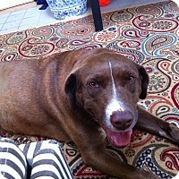 Adopt A Pet :: Lola - Homewood, AL