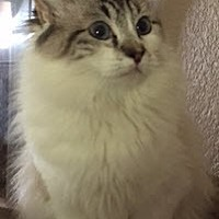 Adopt A Pet :: Jewel - Southlake, TX