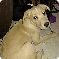 Adopt A Pet :: Taylor - Tampa, FL