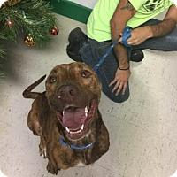 Adopt A Pet :: Sanka - Monroe, MI