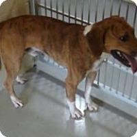 Adopt A Pet :: Joe Cool - Avon, NY