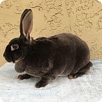 Adopt A Pet :: Donkey - Bonita, CA