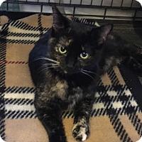 Adopt A Pet :: Meeka - LaGrange, KY