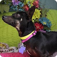 Adopt A Pet :: Friona - San Antonio, TX