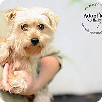 Adopt A Pet :: Olaf - Kansas City, MO