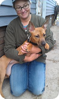 Belgian Malinois/American Pit Bull Terrier Mix Dog for adoption in Cleveland, Ohio - Chloe