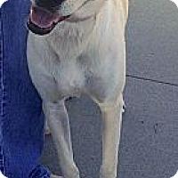 Adopt A Pet :: Juliet - Scottsdale, AZ