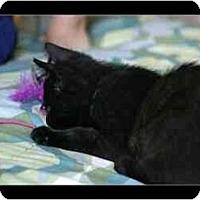 Adopt A Pet :: Oleander - Davis, CA